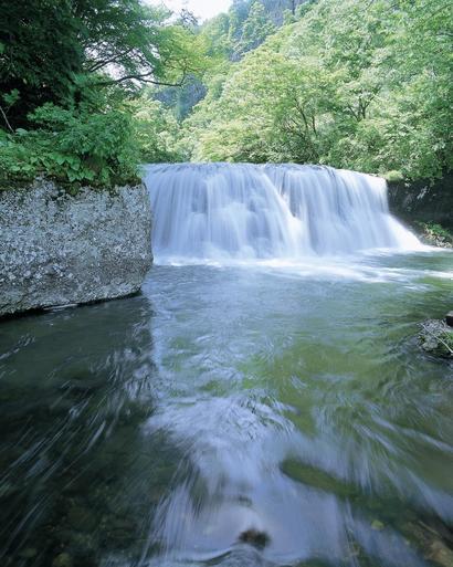 の 稲 し たろ 作柄 滝